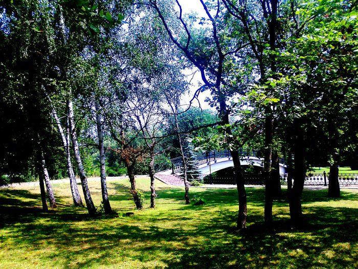 мостик любви💖💞 Tree Grass Field No People Nature Growth Green Color EyeEmNewHere