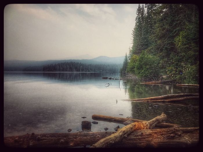 At the edge of the lake with logs trees and mountains in the background Foggy Day Foggy Morning Water Lake Scenics Tranquil Scene Mountain Nature Tranquility Tree Beauty In Nature No People Outdoors Day Sky Swimming EyeEmNewHere