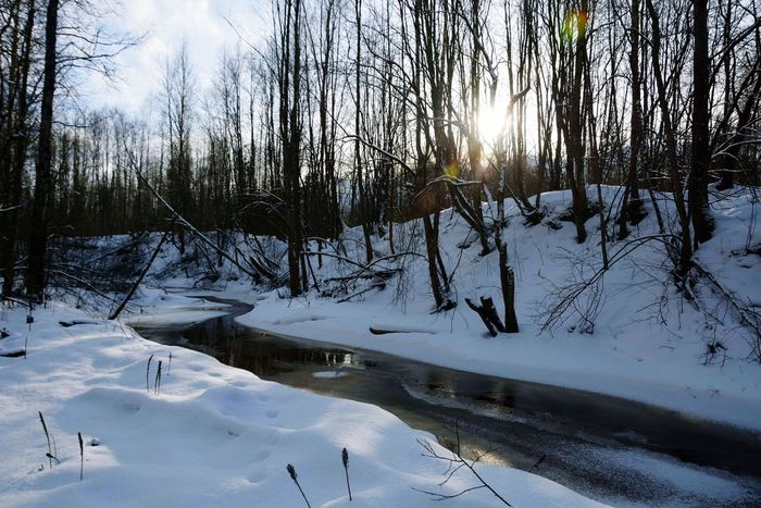 Snow Winter Cold Temperature Nature Tranquility Tranquil Scene Tree No People Frozen Beauty In Nature