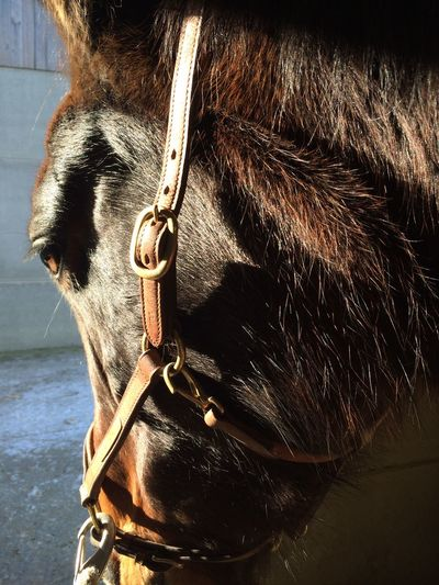 Close-up of horse looking away