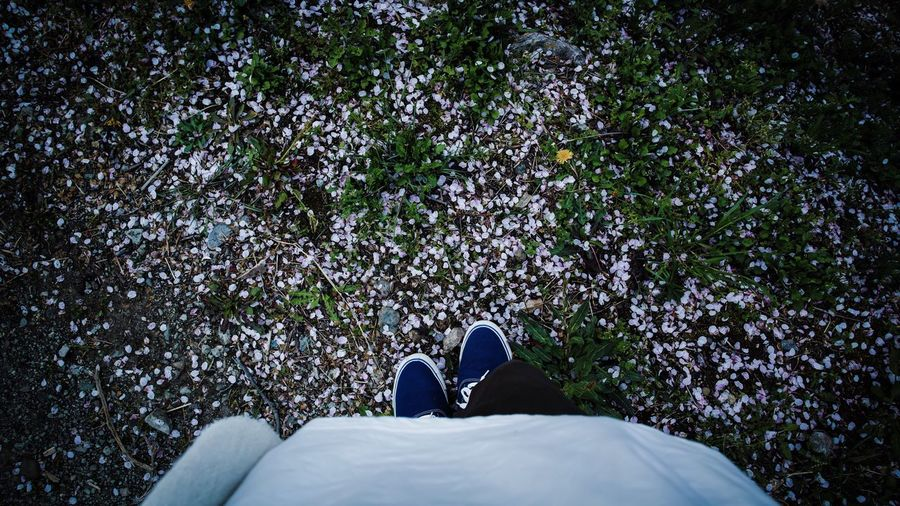 Low section of person standing by fallen petals in park