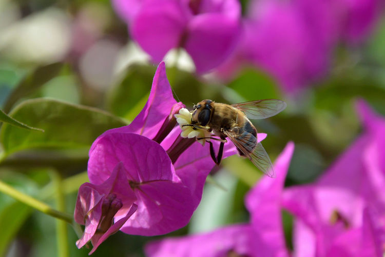 Flower Animal Themes Animal Animals In The Wild One Animal Petal Insect Beauty In Nature Fragility Animal Wildlife Bee Freshness Close-up Flower Head Purple Pollen Bee 🐝