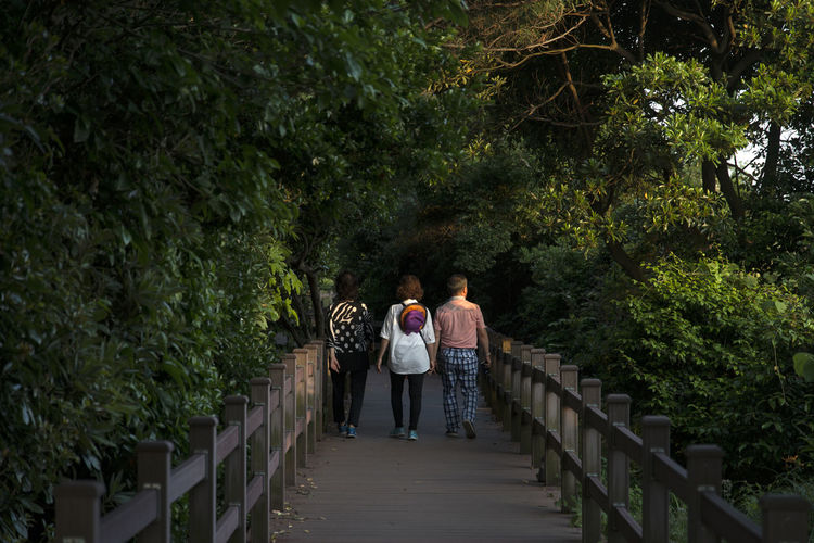 Rear view of people walking on footbridge in forest