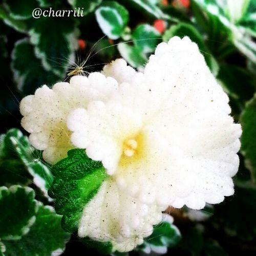 Naturaleza Flowers,Plants & Garden Incienso  Insectos Naturaleza.