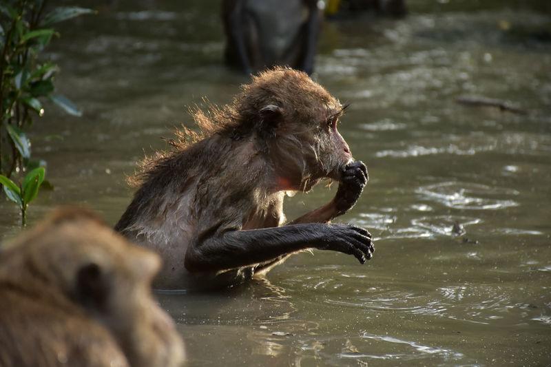 Animal Themes Animal Wildlife Animals In The Wild Lake Mammal Monkey Nature One Animal Water Waterfront