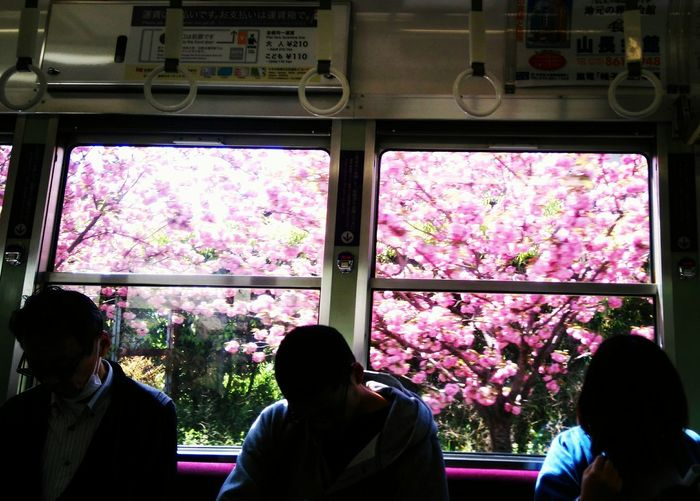 貳拾 Japan Sakura Tramcar 嵐電