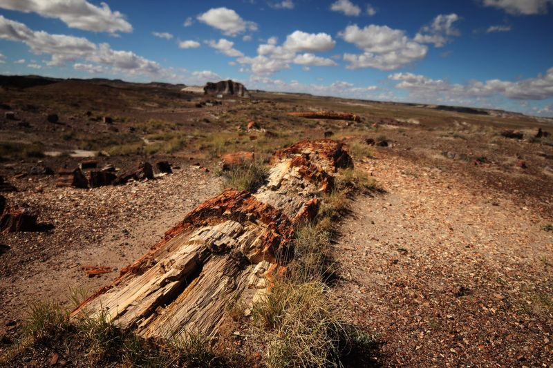 Recently uncovered petrified tree Prehistoric National Park Petrified Forest Large Huge Agate Sky Land Landscape Environment Nature Cloud - Sky Tranquil Scene Tranquility Sunlight Scenics - Nature Day No People Non-urban Scene Field Beauty In Nature Remote Sand Outdoors Plant Dirt