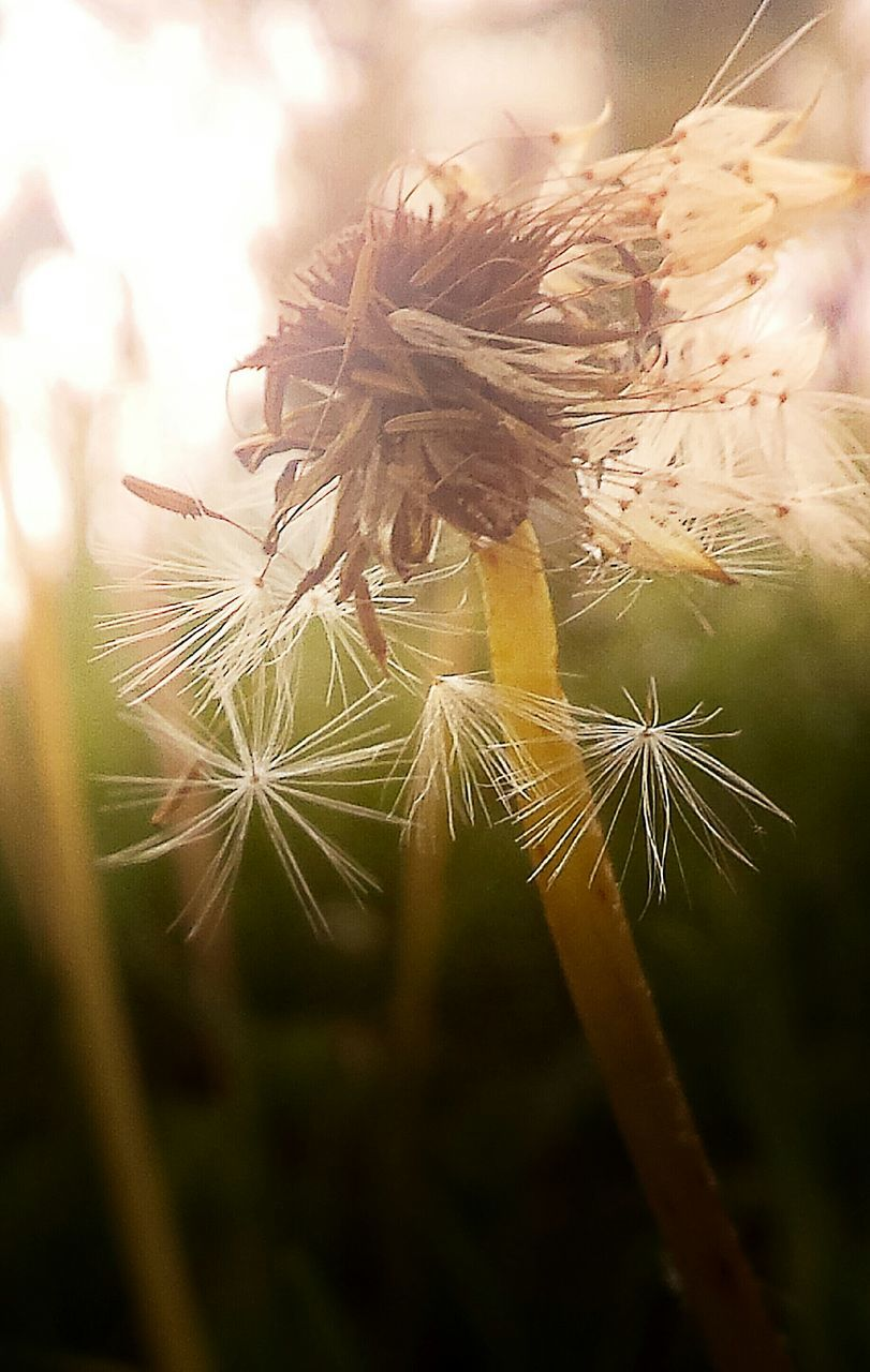 Close-Up Of White Dandelion Seed
