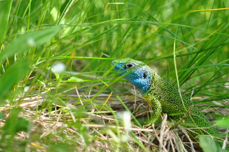 Animal Themes Animal Wildlife Animal Animals In The Wild Vertebrate Green Color Plant One Animal Grass Nature No People Day Selective Focus Land Growth Field Bird Outdoors Close-up Beauty In Nature