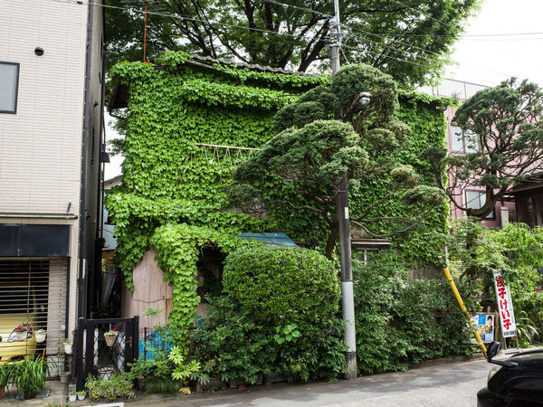 Abandoned Architecture Building Exterior Built Structure City Green Color House Japan Plant Tokyo Tree