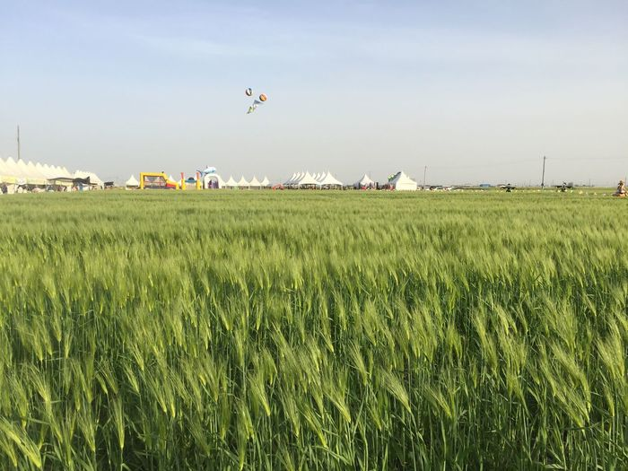 Agriculture Field Farm Rural Scene Nature Crop  Day Growth Landscape Sky Outdoors Beauty In Nature No People Scenics Cereal Plant Grass Flying