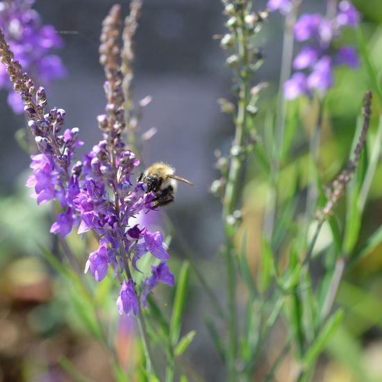 EyeEm Nature Lover Micro Nature Honey Bees  Taking Photos
