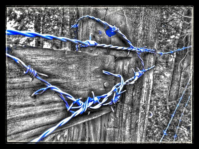 Barbed Wire Wednesday Barbwire Wednesday Barb Wire Snapseed