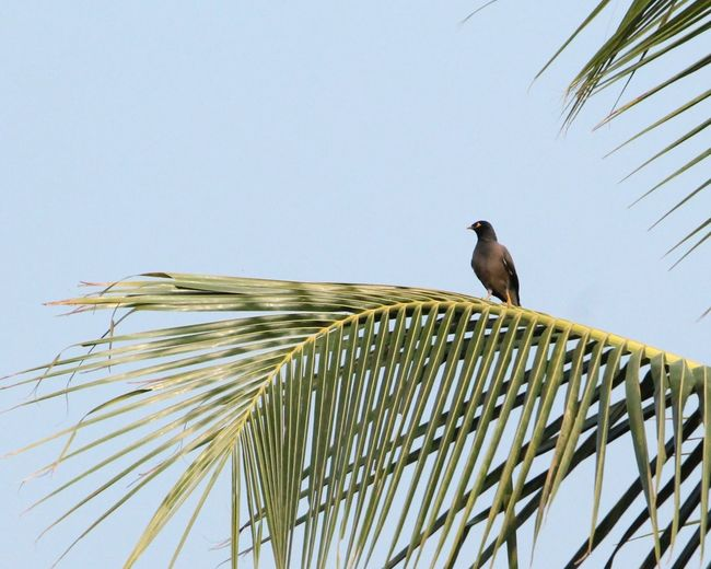 Low angle view of bird perched on tree