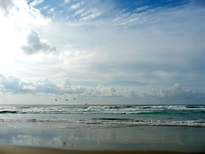 Beach Beauty In Nature Cloud - Sky Cloud Formations Over Ocean Day Horizon Over Water Nature No People Outdoors Reflections On Beach Sand Scenics Sea Seagulls In Flight Sky The Great Outdoors - 2017 EyeEm Awards Tranquil Scene Tranquility Water Wave