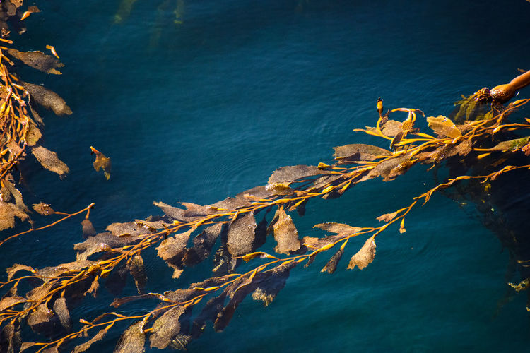High angle view of leaves on lake against blue sky