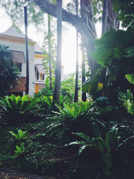 sun light VSCO Vscocam Beauty In Nature Nature Folk Folklife Vscogood Tree Nature Day No People Growth Sunlight Outdoors Beauty In Nature Greenhouse Freshness