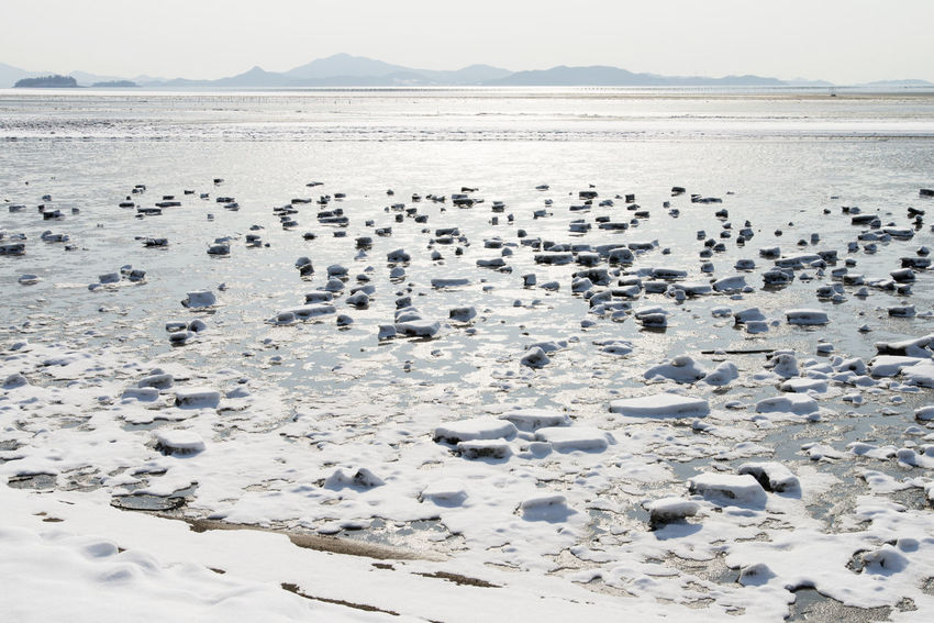 winter scenery at the seaside of Jeungdo Island in Sinan, Jeonnam, South Korea Colors Frozen Ice Jeungdo Snow ❄ Winter Winter Landscape Animal Themes Animals In The Wild Beach Beauty In Nature Bird Cold Cold Temperature Day Frozen Mud Flat Frozen Seaside Large Group Of Animals Mud Flat Nature No People Outdoors Scenics Sea Seaside Sinan Sky Snow Water Winter Land