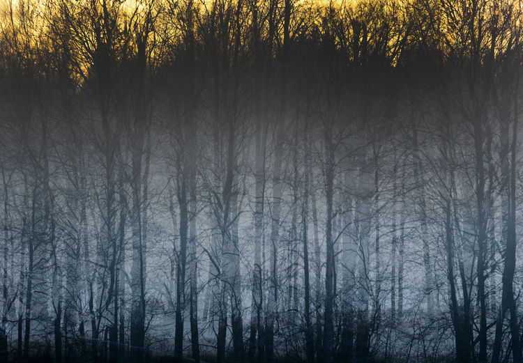 Silhouette trees in forest during winter