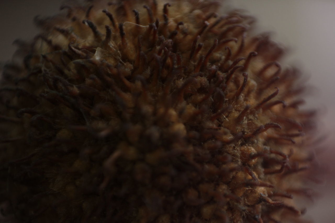 food and drink, selective focus, close-up, food, freshness, no people, indoors, healthy eating, passion flower, day