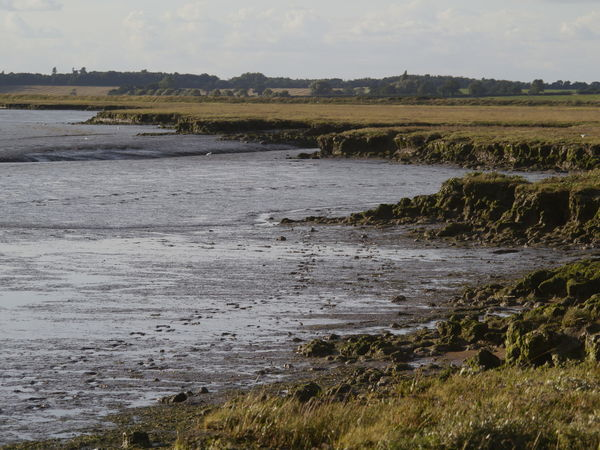 Bawdsey Marshes Agriculture Bawdsey Beauty In Nature Day Deben River, Suffolk Estuary Landscape Marshland  Multi Colored Nature No People Outdoors River Rural Scene Scenics Sky Stream - Flowing Water Suffolk, United Kingdom Tide Water