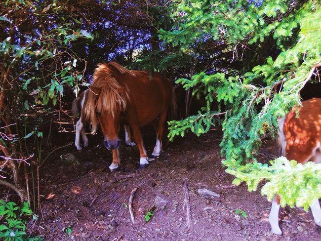 Magic Appalachian trail ponies Appalachian Trail Animal Themes Horse Grayson Highlands National Park