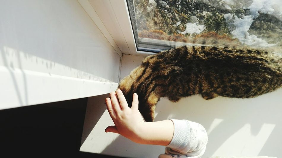 Cat Catlover One Person Human Body Part Only Women Adults Only One Woman Only Indoors  People Close-up Young Women Young Adult Human Hand Women Real People One Young Woman Only Lifestyles Day Adult AI Now