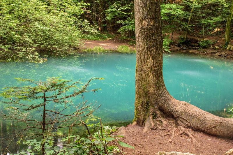 Tree Trunk Blue