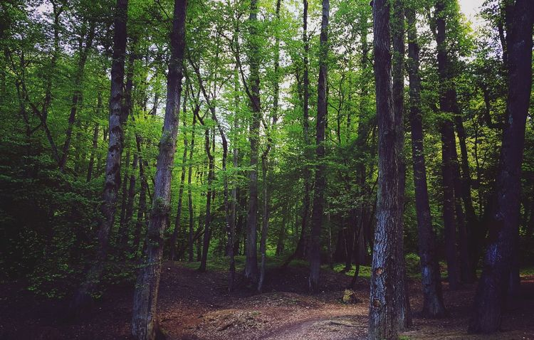 جنگل چورت دودانگه Sari Forest Iran Nature Mazandaran