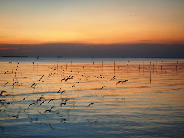 Seabirds and twilight moment Beauty Of Nature Seascape Birds Seagulls Evening Twilight Sunset Water Surface Flying