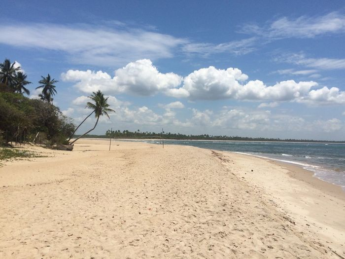Bahia Brazil Beach Sand Sea Sky Nature Cloud - Sky Tranquility Tranquil Scene Tree Palm Tree Day Scenics Water No People Beauty In Nature Outdoors