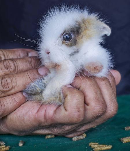 Holding cute baby rabbit