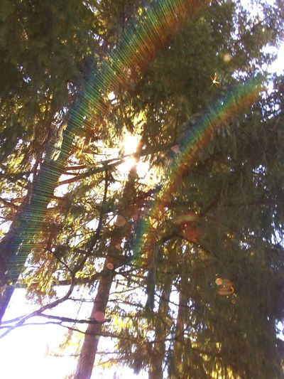 Sunthroughtrees Tree_collection  Rainbow Flare Color Portrait Colors In Nature Outside Photography Backyard Photography Look Up And Take A Picture📸 Use Whats Near You Possibilities  Ideas Are Everywhere Creation Nature_collection Nature Photography Treehugger My Trees Wicked Awesome Glistening Isnt Nature Grand? Showcase September Beautamas! Mother Nature Live In The Moment Shiny Happy
