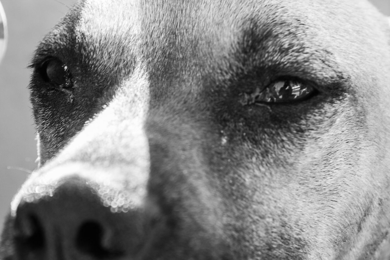 domestic animals, dog, close-up, mammal, animal head, pets, animal themes, one animal, no people, day, outdoors, portrait