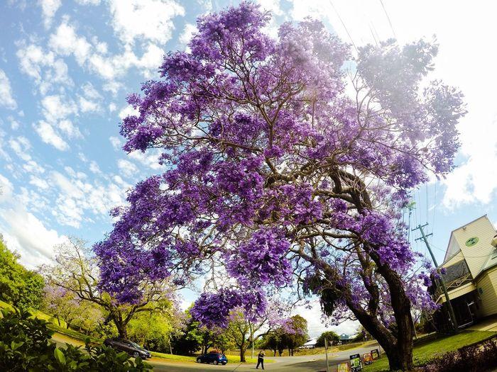 Grafton NSW Australia Grafton NSW Nsw New Soyth Wales