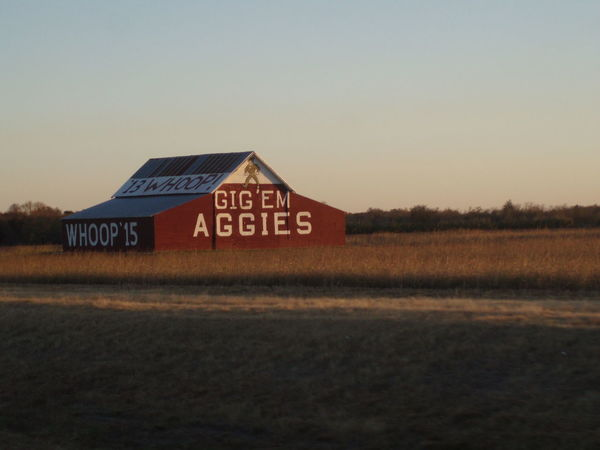 Fighting Texas Aggies! Gig'em! Texas Aggies!!  Architecture Built Structure Grass No People Tamu
