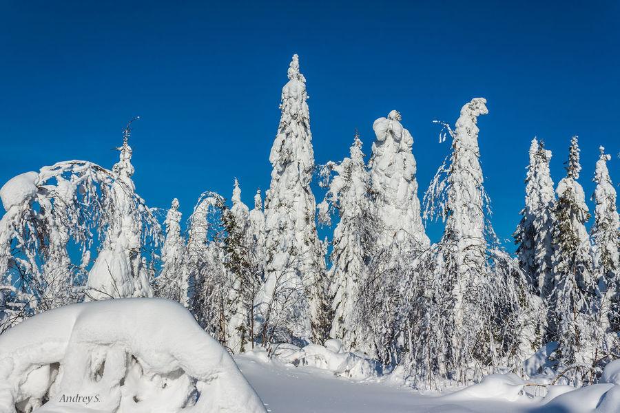 Зимний лес Forest Snow ❄ Nature Landscape
