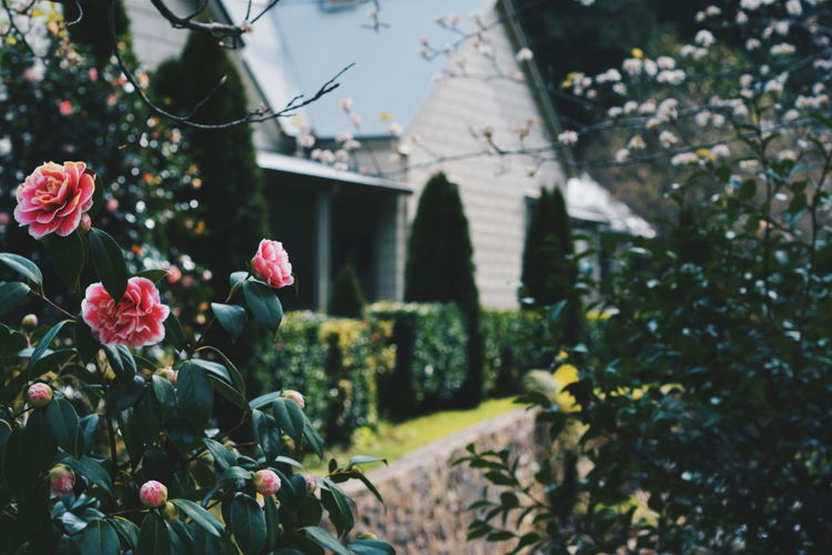 Old Town House Roses Nature Low Exposure Cold Home Outdoors First Eyeem Photo