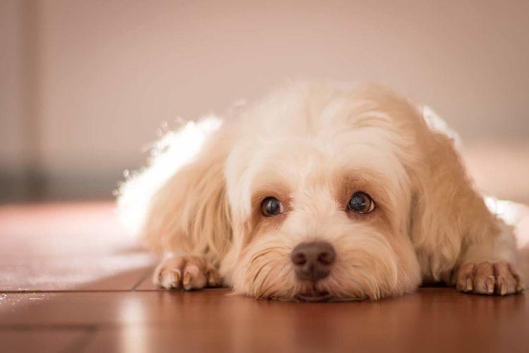 Cute dog Pets