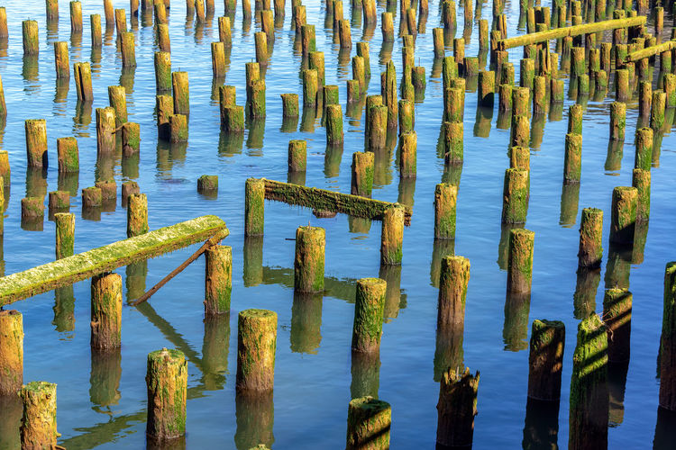 View of the ruins of an old pier in the Columbia River in Astoria, Oregon Astoria Oregon Columbia River Travel Travel Destinations Tourism Outdoors Day Nature No People USA Pacific Northwest  Pier Dock Water Tranquility Wood - Material Post Wooden Post Beauty In Nature Lake Green Color Plant In A Row Growth Tranquil Scene High Angle View