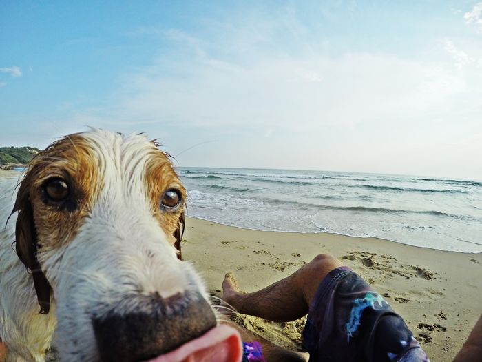 Close-up of wet dog by man at beach