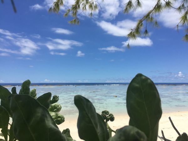 Beach Beauty In Nature Blue Close-up Cloud - Sky Day Guam Horizon Over Water Nature No People Outdoors Scenics Sea Sky Tree Water
