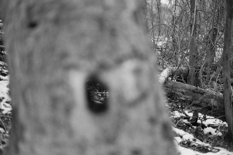 Art Is Everywhere Backgrounds Forest Full Frame 35mm Film Analogue Photography Black & White Black And White Blackandwhite Blackandwhite Photography Caffenol Canon AE-1 Film Beauty In Nature Forest Photography Outdoors Bare Tree No People Growth