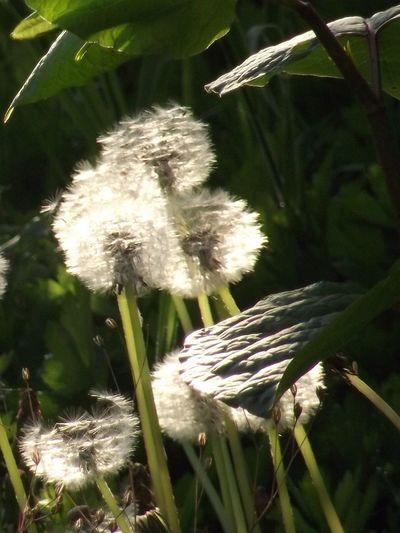 Sun-catchers,