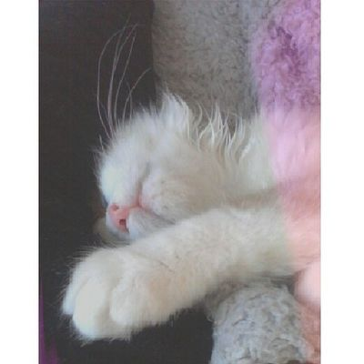 Quiero que me enseñe a dormir Srenrique Cat Cats Catstagram instacat sleep