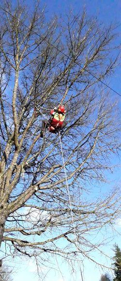 Baumpfleger Baumkletterer Baumklettern Seilklettertechnik Klettern Climbing Climber Climber At Work Baumpflege Tree