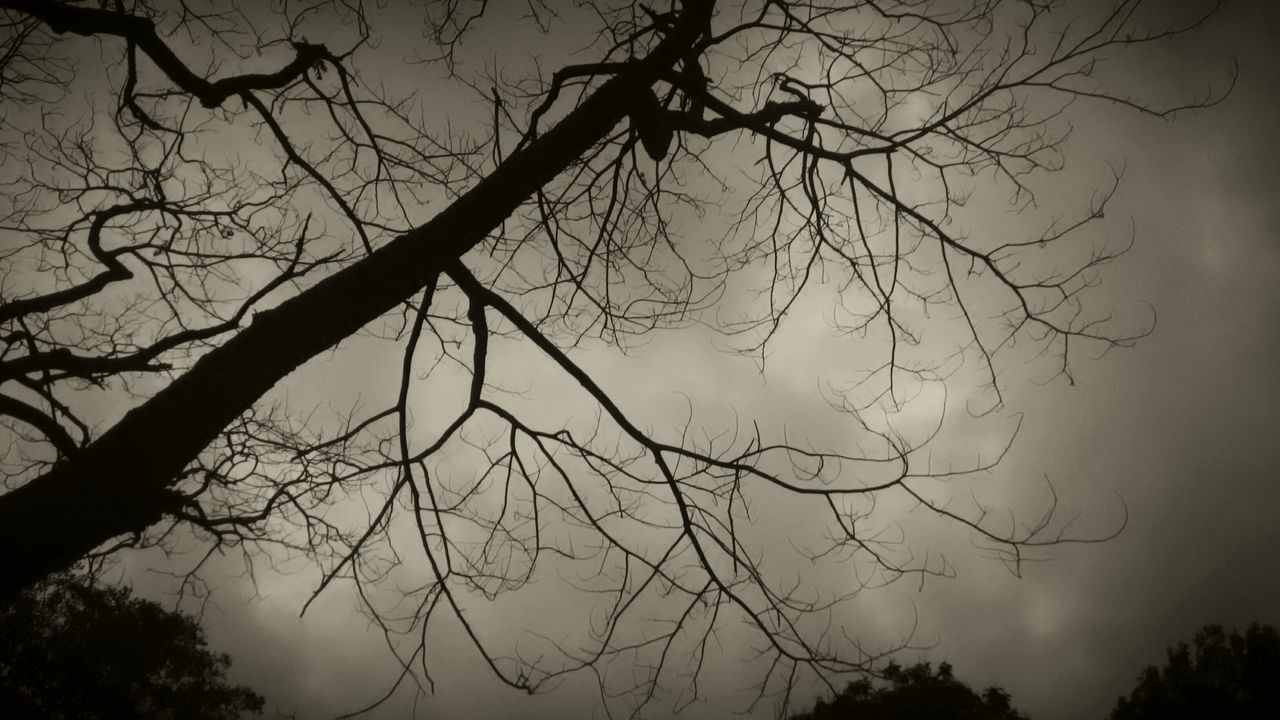 bare tree, tree, branch, silhouette, nature, outdoors, sky, beauty in nature, no people, low angle view, day