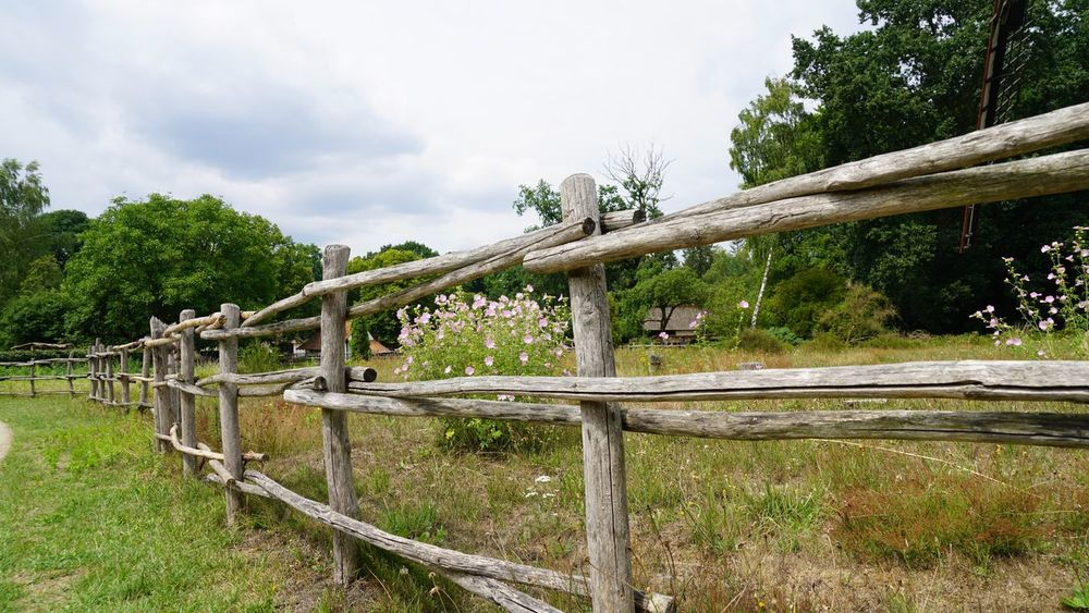 Tree Wood - Material Nature Sky Outdoors No People Day Green Color Cloud - Sky Grass Beauty In Nature Landscape Mammal Animal Themes Country Life Daylight Fence Wooden Fence Countryside Nature_collection Nature Photography Grassland View Summer Belgium