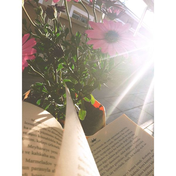 Day Sunlight Window Indoors  No People Close-up Nature Green Green Green!  Throwback TBT  EyeEm Diversity Green Green Green!  Women City Flower Flowers Books Book Bookshelf Bookphoto Booking A Room Bookstore Bookstagram Bookworm Bookphotography