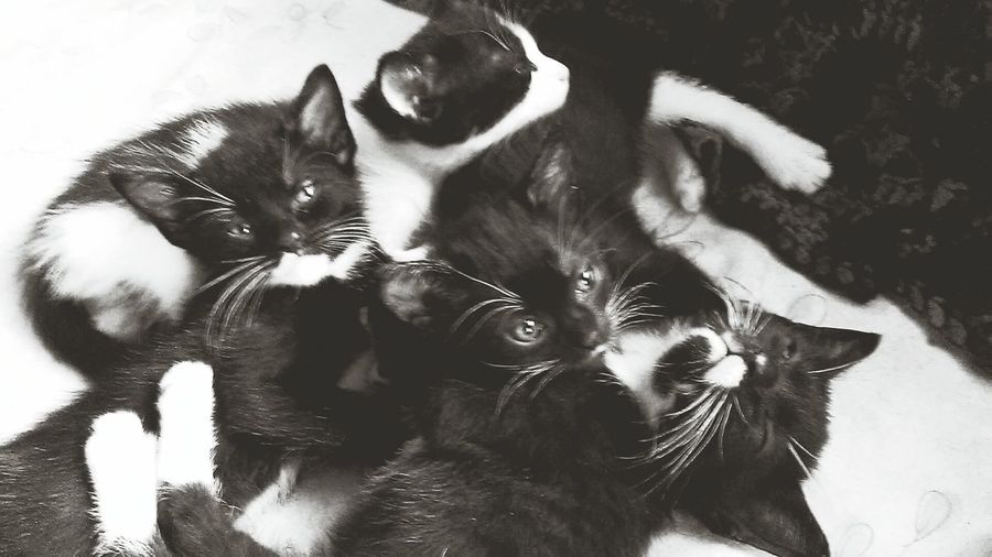 Relaxing Sleepy Kittys Enjoying Life EyeEm Black&white!